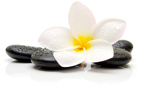 medisense bloem stenen